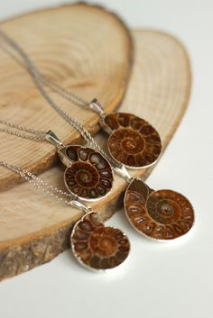 OOAK Genuine Ammonite fossil slice necklace amonite slice necklacesilver electroplated a perfect gift wedding christmas mother's day (22.00 USD) by BridesWeddingStore