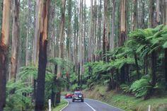 Dandenong Ranges, VIC Vibe Hotel, Day Trip, Melbourne, Skiing, Scenery, Journey, Australia, Adventure, Ranges