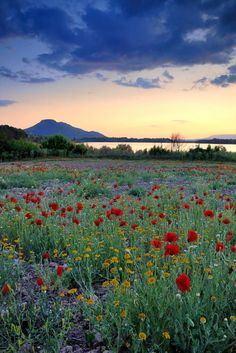 travelandseetheworld:  Red Poppies Sunset At The Lake