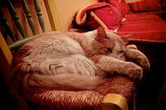 Tumblr, Cats, Animals, Gatos, Animales, Animaux, Animal, Cat, Animais