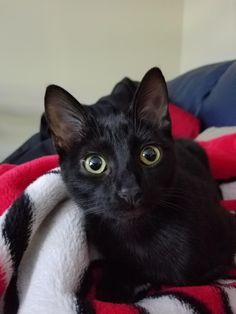 Im a new cat Dad! Meet Toothless!More Cute Cats