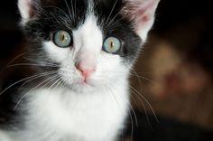 Domino the Kitten - Week 2