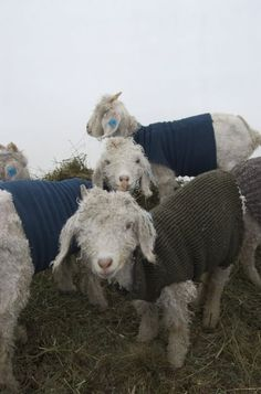 I love their little sweaters.  And their little faces.  Particular Poetry