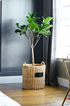 newest favorite plant.the fiddle leaf fig tree! Thrifty Decor Chick, Fiddle Leaf Fig Tree, Foliage Plants, Interior Exterior, Interior Design, Indoor Plants, Pot Plants, Decorating Your Home, Decorating Ideas