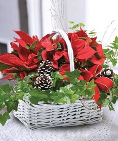 Poinsettia and Ivy