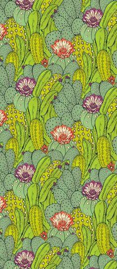 Cactus City by Hannah Holmes