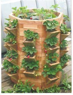 Tour a fraisiers 1 jpg Aquaponics System, Hydroponics, Strawberry Planters, Strawberry Garden, Verticle Garden, Garden Planters, Leafy Plants, Indoor Plants, Tower Garden