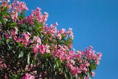 Por mais dias floridos em Cascavel!  Ótimo sabadão pra vocês 😊  #CatveCascavel #foto #paisagem #Cascavel #flores