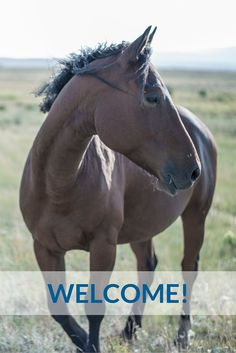 Welcome to follow Horsepro's Pinterest account! #horse #horses #riding