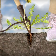 Grampa's Weeder Removing weed is easier with Grampa's Weeder. You will have the best experience with what this ha Succulent Landscaping, Planting Succulents, Backyard Landscaping, New Gadgets, Cool Gadgets, Garden Projects, Garden Tools, Metal Working Tools, Vegetable Garden Design