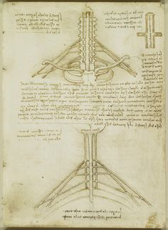 The brachial plexus. Leonardo da Vinci (Vinci 1452-Amboise 1519)    #TuscanyAgriturismoGiratola