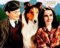 Lassie! Come here girl!