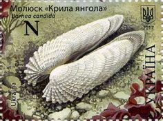 Stamp: Barnea candida (Ukraine) (The Black Sea) Mi:UA 1606