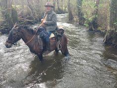 Trail Equestrian, Trail, Horses, Animals, Animales, Animaux, Horse, Hunter Jumper, Horseback Riding