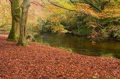 Autumn Woodland Wildlife Walk | Walking in Cornwall | The Cormorant Hotel, Fowey | http://www.cormoranthotel.co.uk/blog/wildlife-walks-in-cornwall/