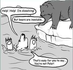 Polar bear @Nicole A @Rebecca Stutchbury