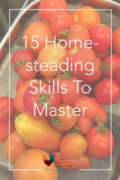 Does the sheer amount of skills you need to learn for homesteading seem overwhelming? We discuss 15 homesteading skills you should learn to help you thrive. Homesteading skills | Timeless Skills