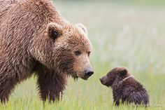 Funny pictures about 25 Of The Best Parenting Moments In The Animal Kingdom. Oh, and cool pics about 25 Of The Best Parenting Moments In The Animal Kingdom. Also, 25 Of The Best Parenting Moments In The Animal Kingdom photos. Tin Man, Animals And Pets, Baby Animals, Cute Animals, Wild Animals, Animal Babies, Forest Animals, Wildlife Photography, Animal Photography