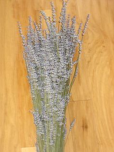 Fresh or dried Lavender Bunches Growers Bunch - Approximately 480 stems: $48.00 Regular Bunch - Approximately 120 stems: $12.00 (in petaluma!)