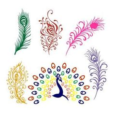 Peacock Feathers SVG Cuttable Designs
