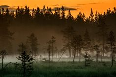 Misty forest in the evening Misty Dawn, Magical Pictures, Moomin Valley, Misty Forest, Forest Painting, Wonderful Picture, Nature Photos, Finland, Mists