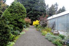 perigo jardim: Descobrindo a Greenhouse Pat Calvert no Washington Park Arboretum