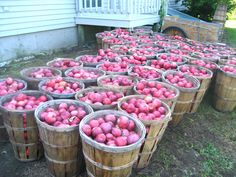 OMG!! Now let's get to making that apple butter and apple sauce. love it..