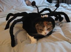 """""""If I could kill you like this spider, I would. No question."""""""