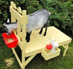 Cabras Boer, Goat Feeder, Goat Pen, Goat House, Goat Care, Nigerian Dwarf Goats, Raising Goats, Sustainable Farming, Sustainable Living