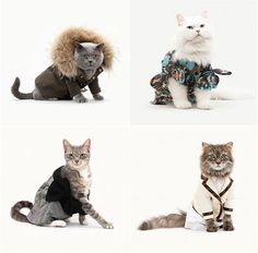Cats - nice picture
