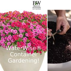 You can get prepared for the heat with a simple set up of Proven Winners® WaterWise® Kit, and your containers are set for the summer. Simply go to Proven Winners website to search their Home Gardener's Shop. Proven Winners, Water Wise, Windy Day, Flower Boxes, Tropical Plants, Hanging Baskets, Container Gardening, Backyard, Kit