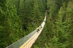 A narrow pedestrian suspension bridge disappears into the trees.