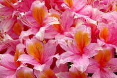 Conheça as plantas ideais para cultivar em sacadas no verão #jardinagem