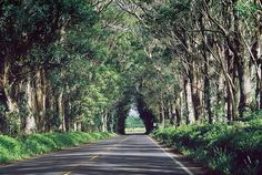 Tunnel of Trees on Kaua'i - way better in person than in the movie!