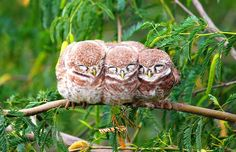 16+ Pics Of Birds Cuddling Together For Warmth Will Melt Your Heart | Bored Panda