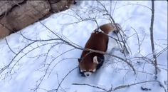 """""""OH MY GOSH, IT'S THE MOST WONDERFUL TIME OF THE YEAR!"""" 