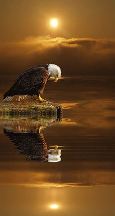 ISAIAH …but those who hope in the Lord will renew their strength. They will soar on wings like eagles; Pretty Birds, Beautiful Birds, Animals Beautiful, Eagle Pictures, Animal Pictures, Gif Pictures, Aigle Animal, Animal Photography, Nature Photography