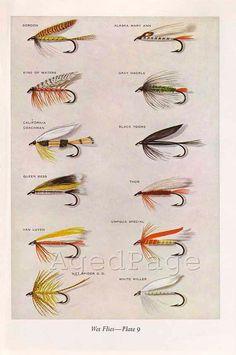 Vintage Print Trout Fishing Flies Art Illustration by AgedPage Trout Fishing Tips, Fishing Rigs, Fishing Knots, Salmon Fishing, Best Fishing, Walleye Fishing, Carp Fishing, Ice Fishing, Fishing Tackle