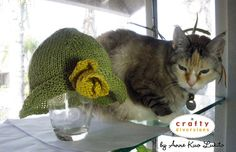 Lez see, cute cat, cute hat, but you has no head...you has glass?