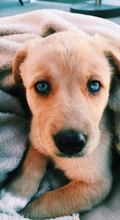Dog Breeds Little .Dog Breeds Little Cute Dogs And Puppies, Baby Dogs, I Love Dogs, Doggies, Puppies Puppies, Cute Little Animals, Cute Funny Animals, Cute Animal Pictures, Cute Creatures