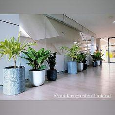 """ถูกใจ 4 คน, ความคิดเห็น 0 รายการ - Modern Garden Thailand (@moderngardenthailand) บน Instagram: """"Indoor plants by Modern Garden 🙏💚 #moderngardenthailand #indoorplant . .  สนใจDm or…"""" Garden, Modern, Shop, Plants, Garten, Trendy Tree, Gardens, Planters, Tuin"""