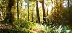 This New Zealand forest- scape...