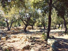 Ses Païsses: Abstecher in die Vergangenheit von Mallorca