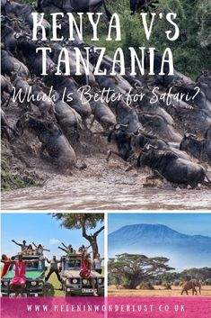 Kenya vs Tanzania - Which is better for safari? Looking at when to go, wildlife, the wildebeest migration, costs and what else the countries have to offer. Grand Teton National, Yellowstone National Park, National Parks, Alaska Travel, Alaska Cruise, Mount Kenya, Tanzania Safari, Mount Kilimanjaro, Tennessee Vacation