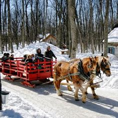 Sucrerie de la Montagne - Rigaud, Quebec - Horse drawn sleds, a roaring fire, and maple syrup - everything you could want from a wedding venue and more. Sugar Bush, St Bernard Dogs, Saint Esprit, Canadian Maple, My Art Studio, Le Havre, Maple Tree, Draft Horses, Horse Drawn