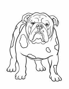 32 Ausmalbilder Französische Bulldogge - Besten Bilder von
