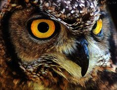 Owl eyes- - Photo Critic... A service of DPC ...