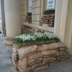 Snowdrops display City Art Gallery Mosley Street Manchester. In memory of the First World War Soldiers.