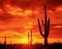 Desert Landscape Tattoo Landscape