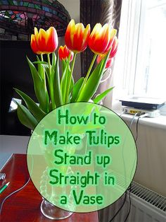 How to Make Tulips Stand Up Straight in a Vase